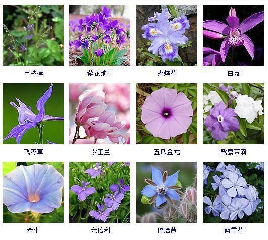 盘点上千种按颜色分类的花卉品种大全!建议收藏~