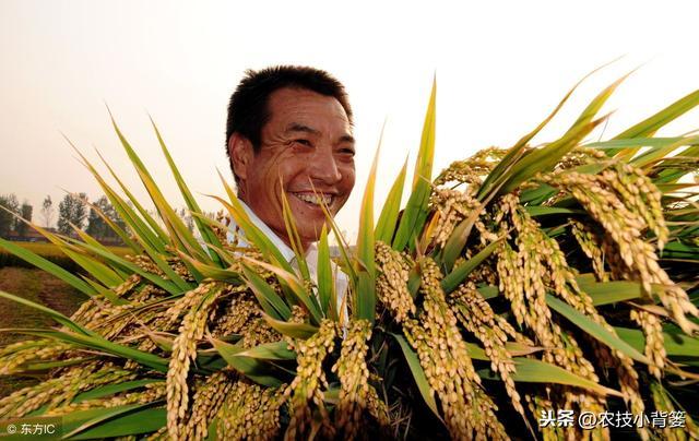 植物激素生长调节剂用的巧,各类农作物才能长得好!