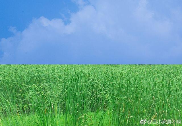 武汉25个最适合一日游的免费景点,够你任性玩一年!