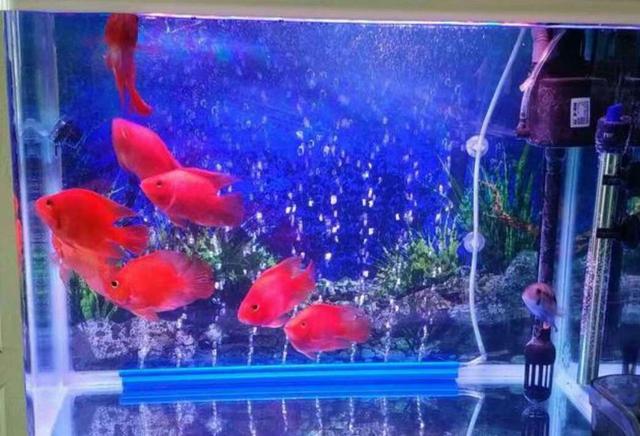 妻子的一个小动作,丈夫想养热带鱼的计划瞬间泡汤!